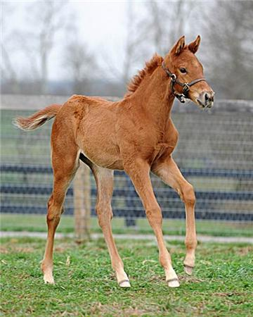 2012 - Brushed Halory - Colt