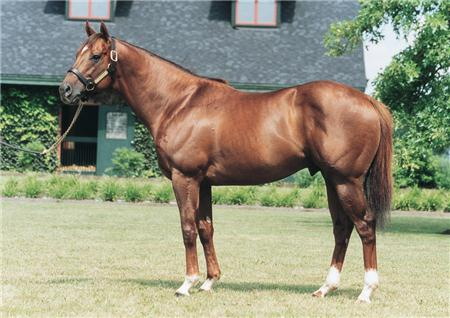 Distorted Humor - A Great Sire