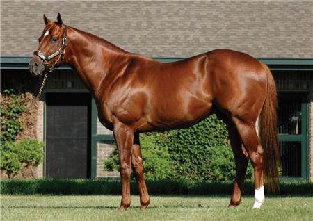 Speightstown - HOTTEST Stallion in Town