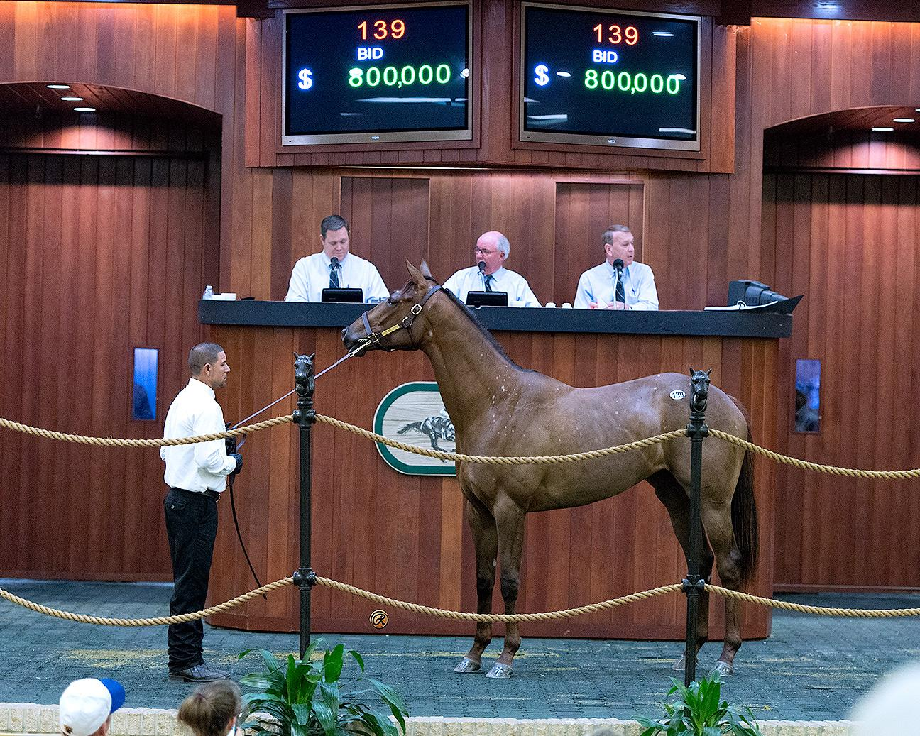 Bellamy Road 2yos average $468,333 at OBS March Sale