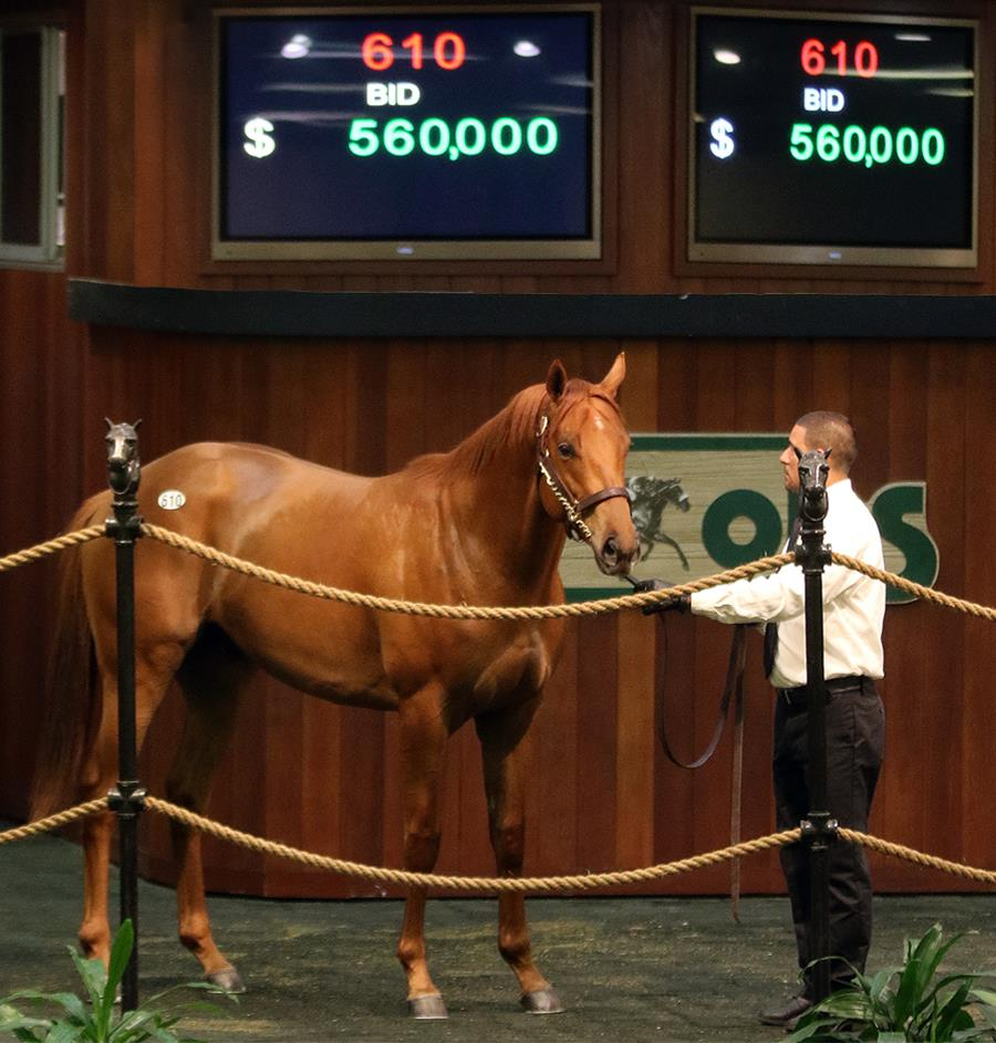 Sidney's Candy delivers big numbers at OBS March sale