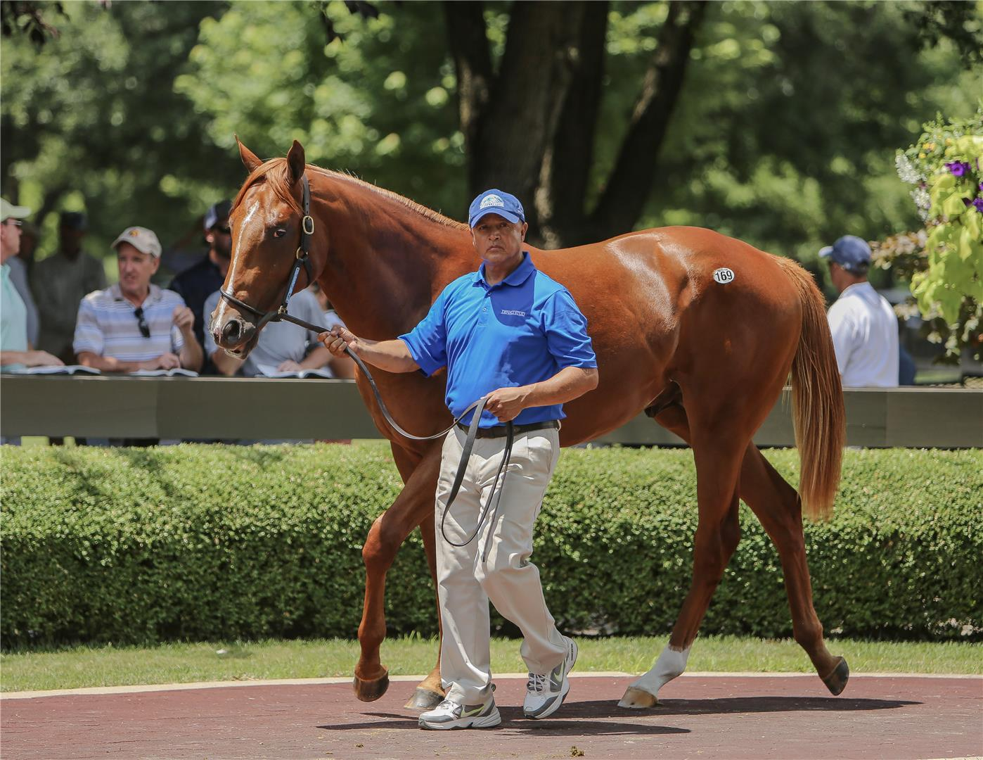 Speightster stands out Fasig-Tipton July sale title=