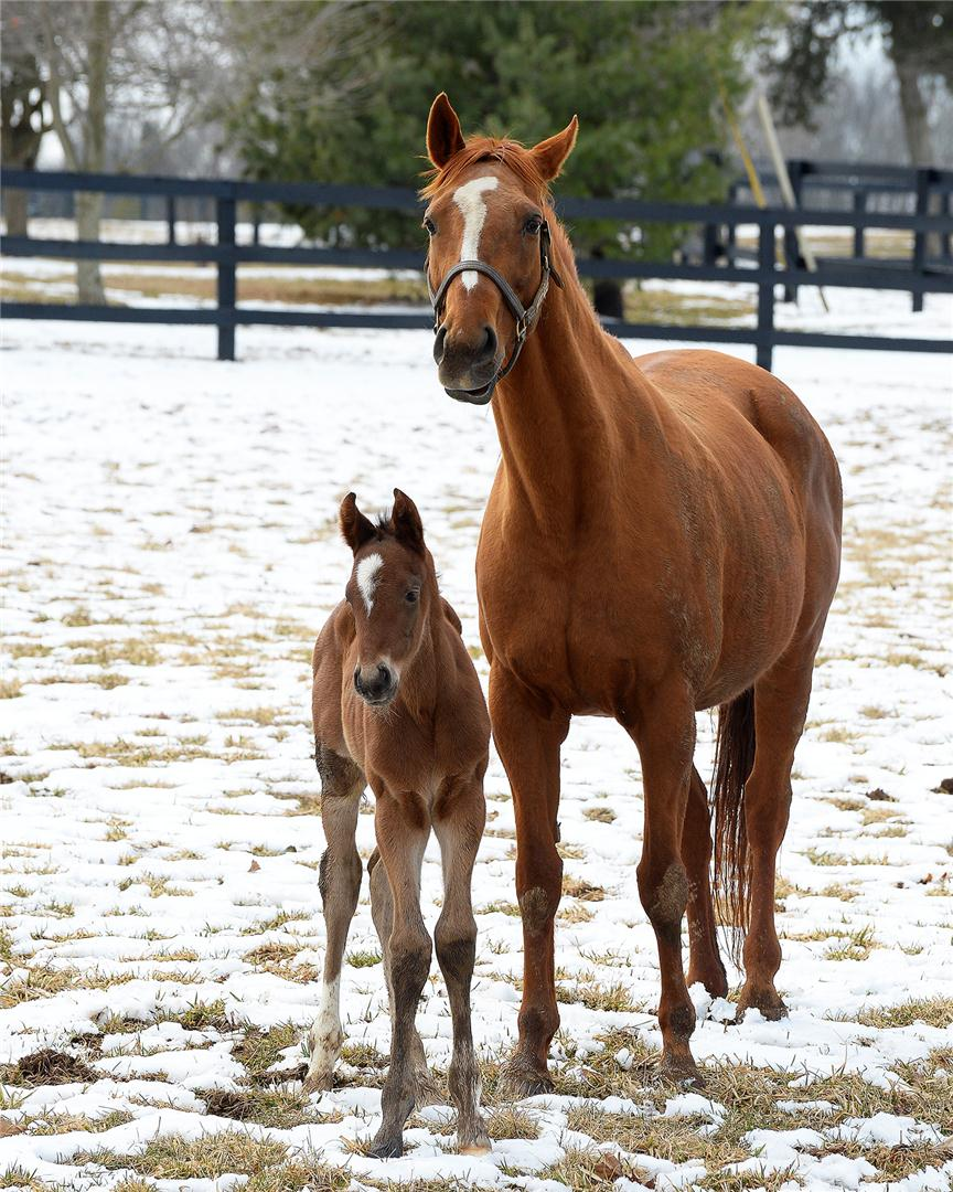 Mining My Own has Bodemeister filly