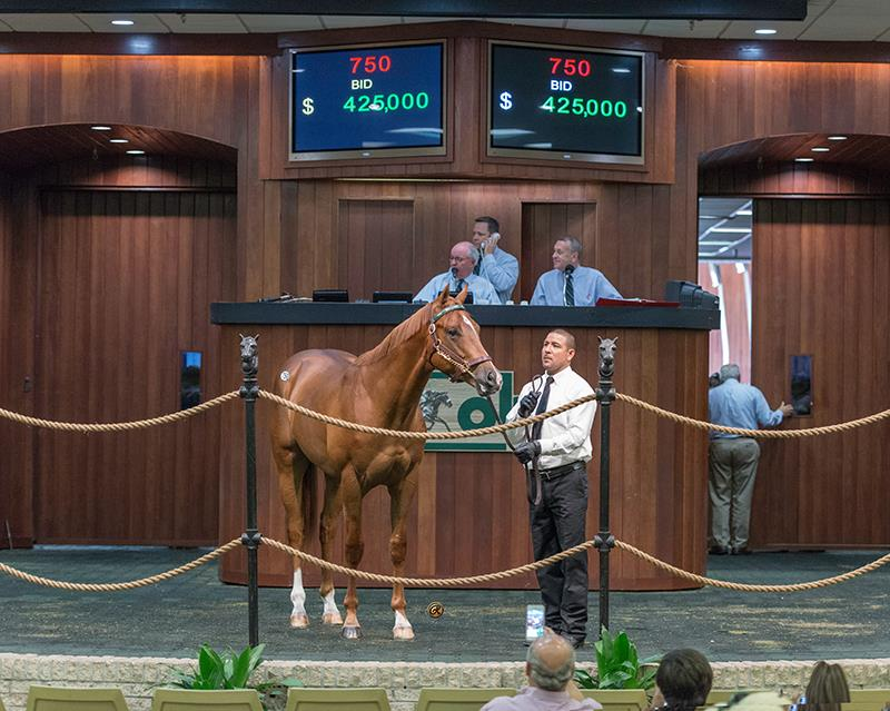 Drosselmeyer juvenile brings $140,000 at OBS