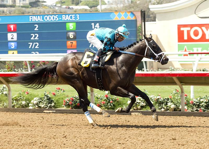 "Big League a ""Star"" in Del Mar maiden special weight unveiling title="