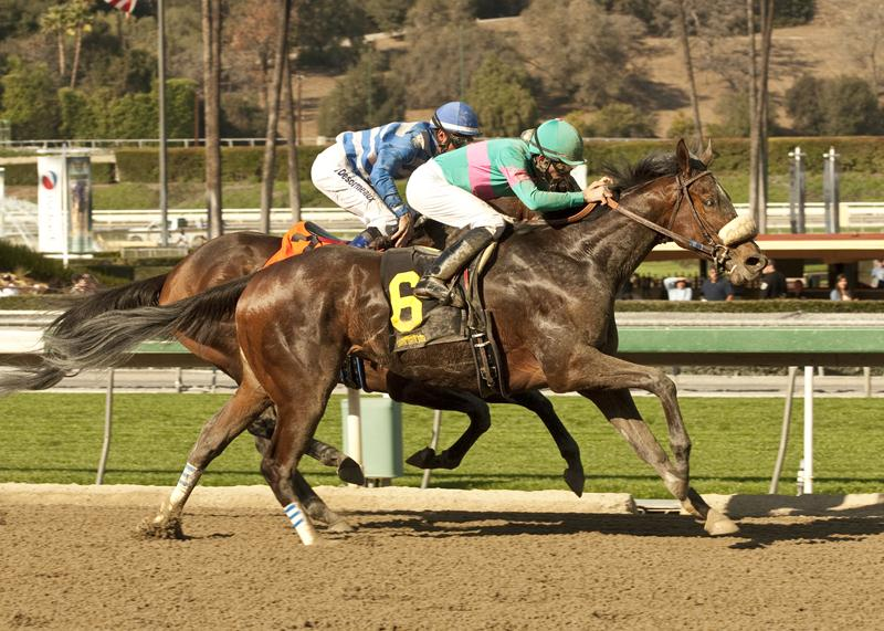 Blingo is best in the 2014 San Antonio S. (G2)