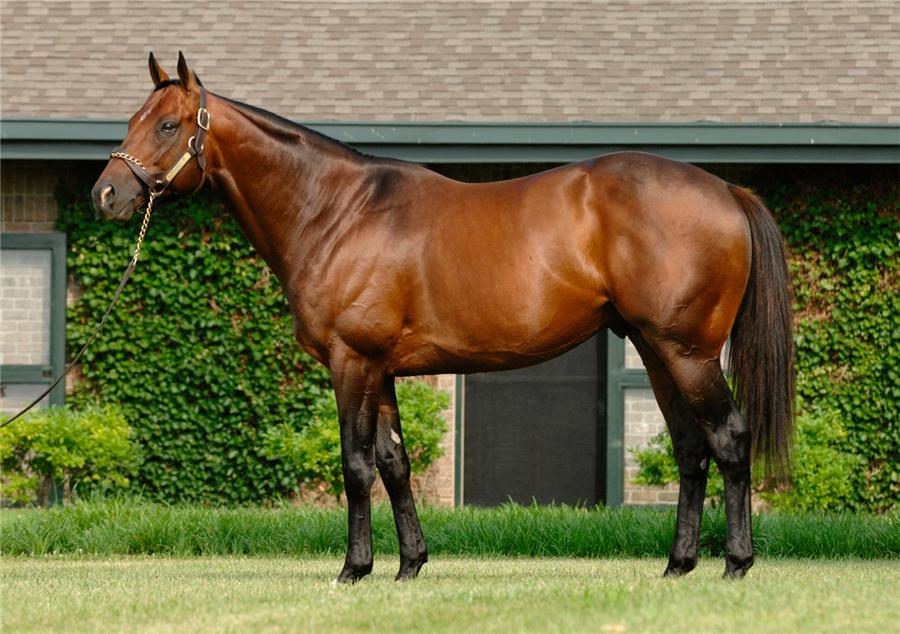 Bluegrass Cat to New York as Vinery/WinStar Venture title=