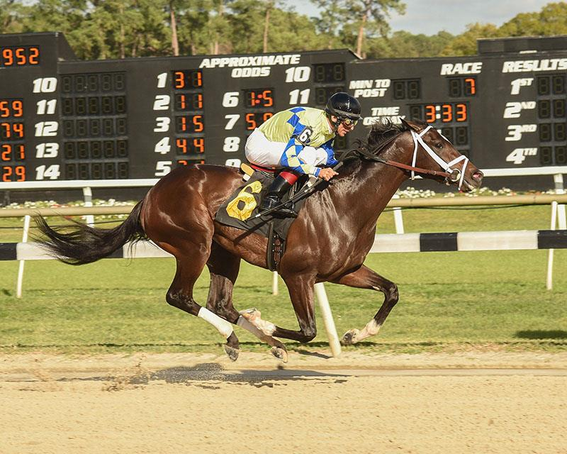 Bodemeister colt romps in Tampa MdSpWt title=