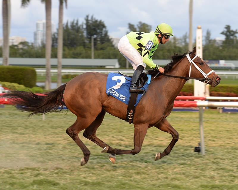 Cash Back delivers stakes triple for Congrats title=