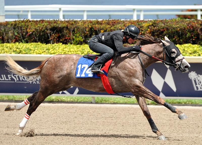 Constitution's $600,000 colt, hip No. 174, breezing at the Fasig-Tipton Gulfstream 2yo sale - Tibor and Judit photography