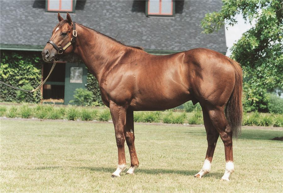 Distorted Humor tops $10M mark in '11 title=