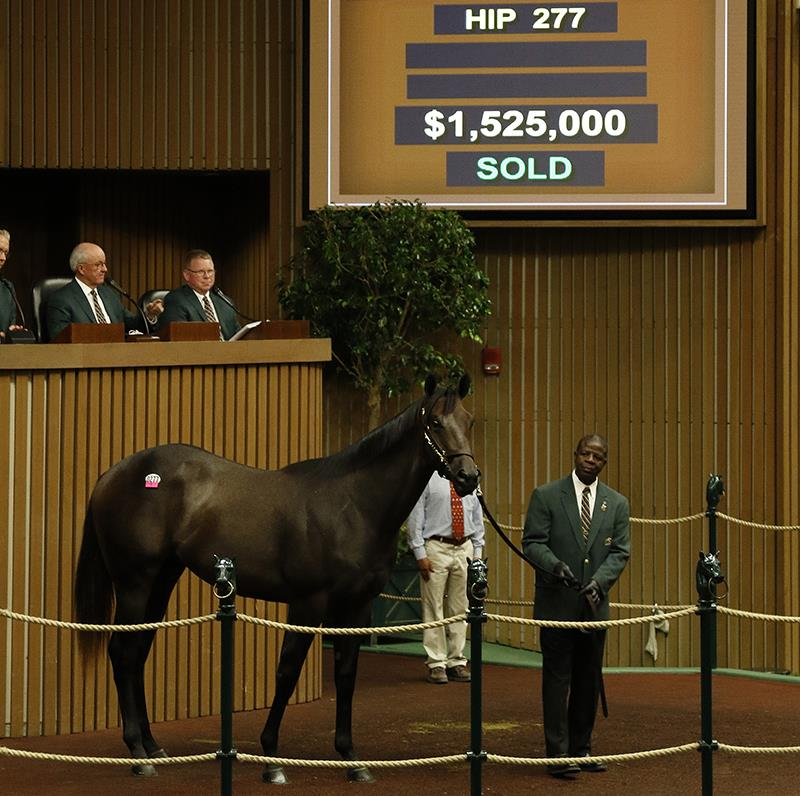 Distorted Humor colt sets the bar at Keeneland September sale title=