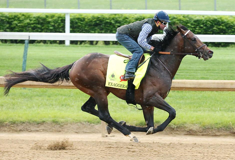 "Exaggerator's connections ""confident"" ahead of Preakness (G1) title="