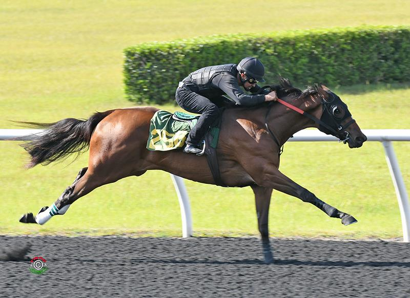 Constitution has top filly of OBS June 2yo Sale opener title=