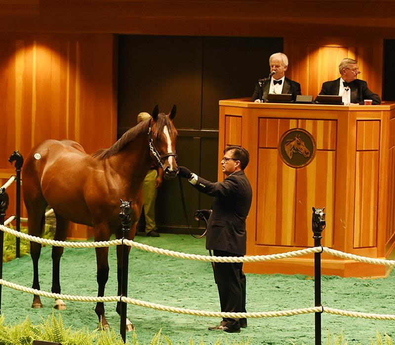 $950,000 Pioneerof the Nile colt tops first day of F-T Saratoga Yearling sale title=