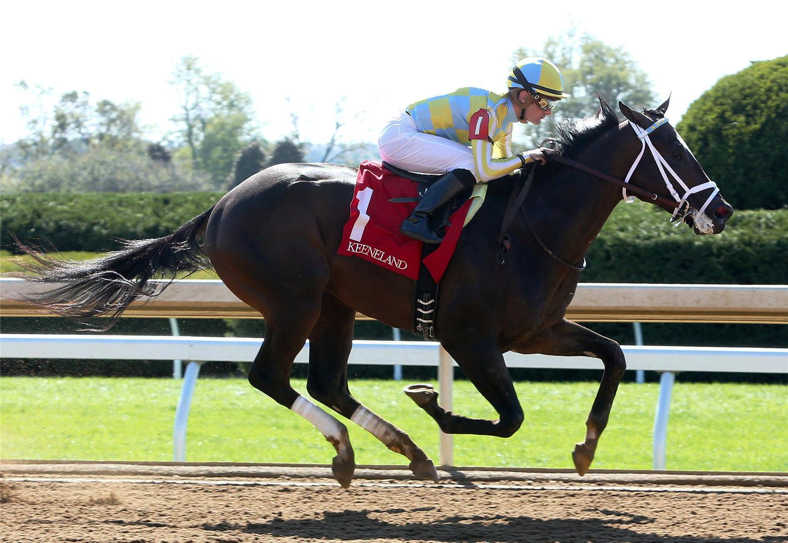 Speedmeister zips to victory in Keeneland debut title=