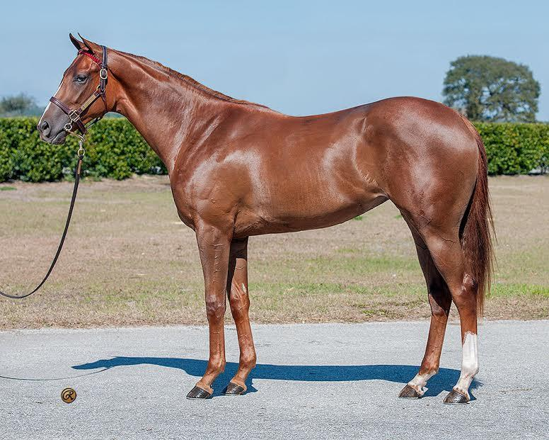 Super Saver hip No. 263 at OBS March 2yo sale
