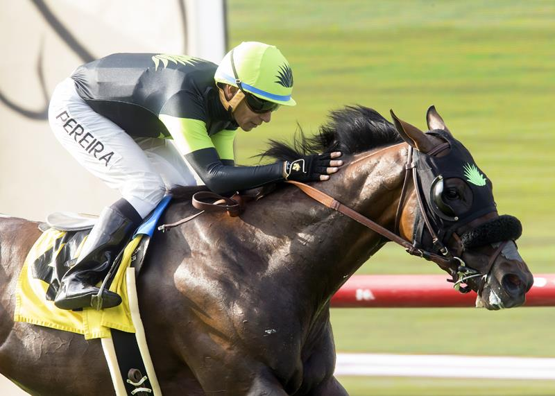 Artie Schiller colt takes Del Mar's Oceanside for third stakes victory title=