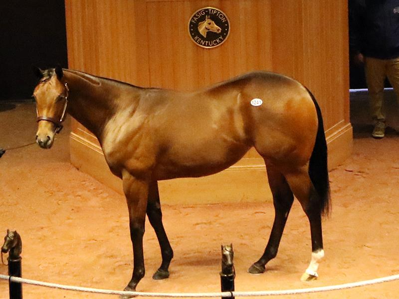 Bodemeister's $225,000 filly, hip 1241, at the FT Oct. Yearling sale - Photo by Z