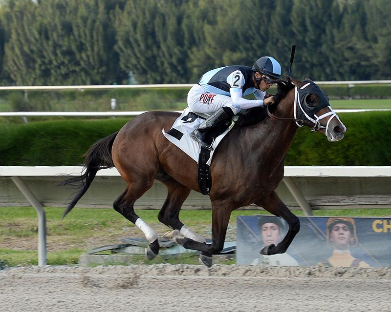 Bodemeister firster impresses at Gulfstream title=