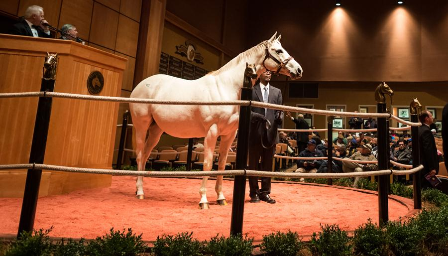 Careless Jewel sells in foal to Bodemeister for $1.85 million
