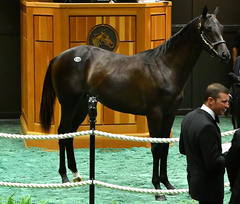 $350K & $295K colts highlight Monday for Bodemeister at F-T Saratoga Sale title=