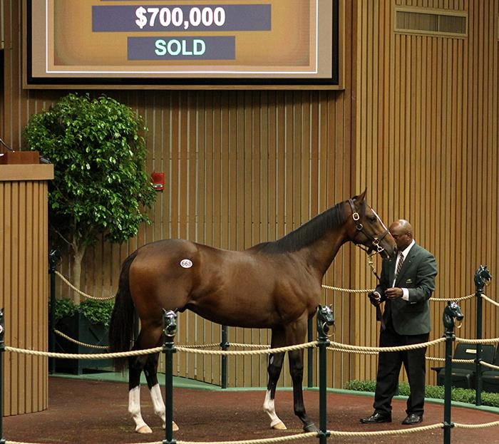 Popular Bodemeister colt goes for $700,000 Wednesday at Keeneland title=