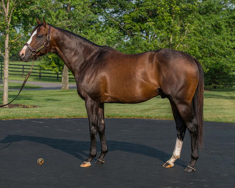 Beautifully-bred Bodemeister filly scores at Monmouth Park title=