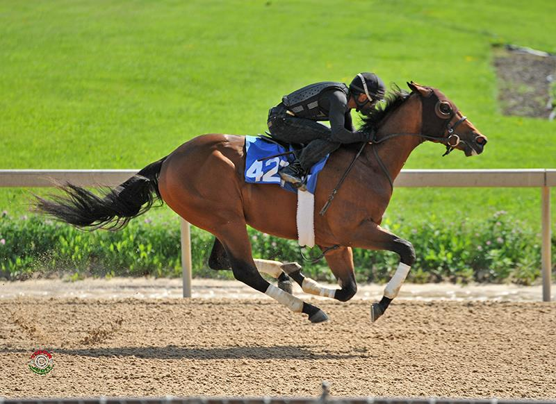F-T Midlantic Sale closes with $300,000 Bodemeister colt title=