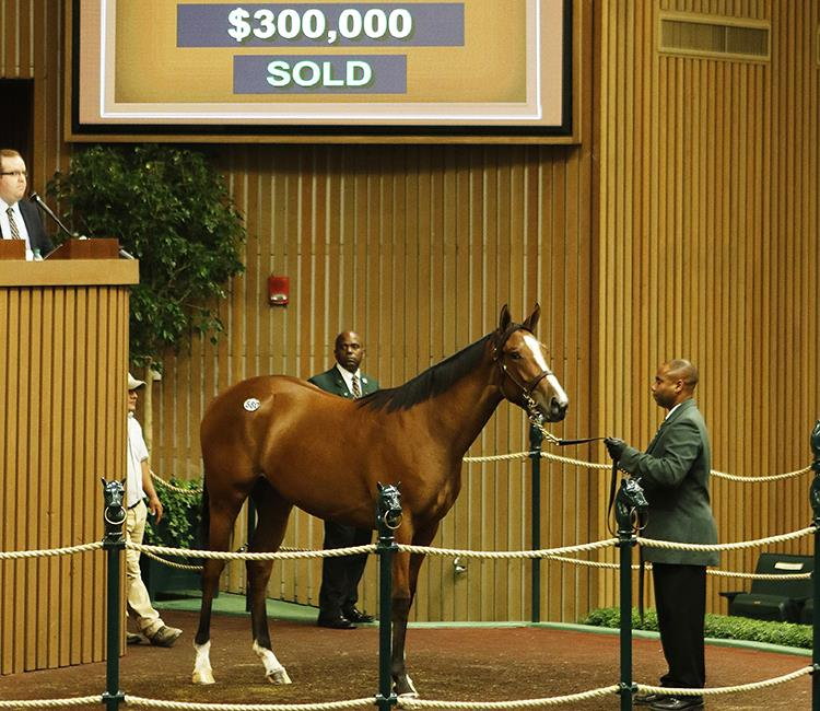 Bodemeister filly brings $300K during Keeneland Day 3 title=
