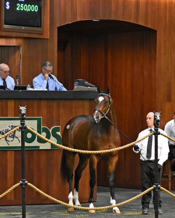 $250K colt for Bodemeister Wednesday at OBS 2yo sale title=