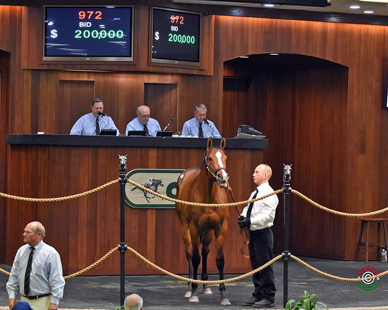 Bodemeister filly sells for $200K Friday at OBS April sale title=