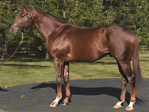 Carpe Diem colt breaks maiden in blowout victory title=
