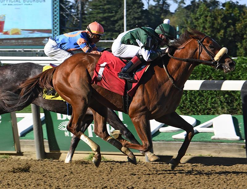 Carpe Diem colt debuts a winner in Belmont Park maiden special weight title=