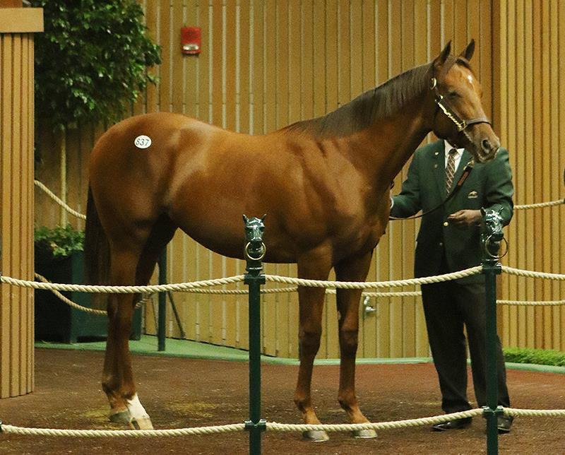 Carpe Diem colt brings $425,000 Thursday at Keeneland title=