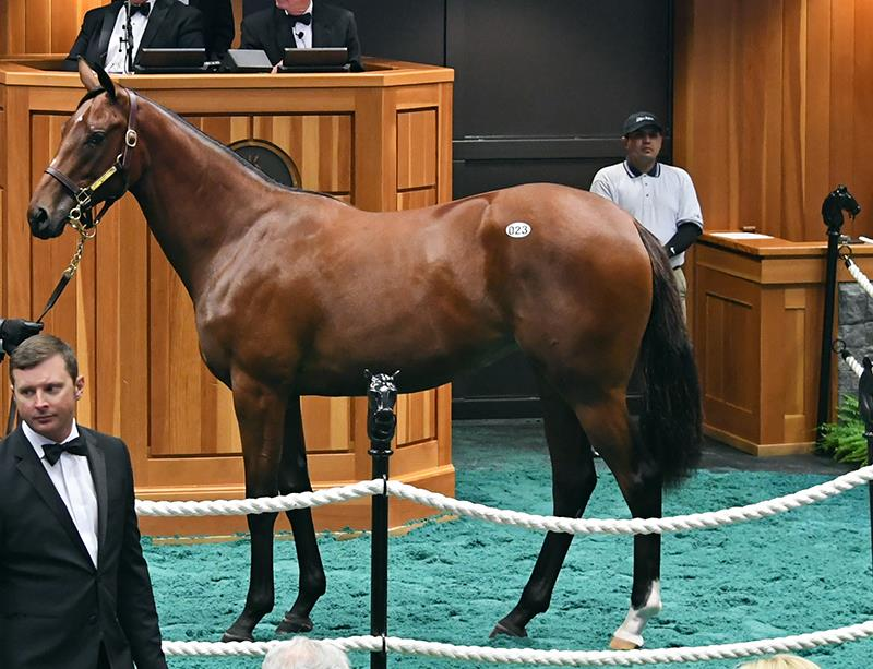 Fasig-Tipton Saratoga sale a coming out for Carpe Diem title=