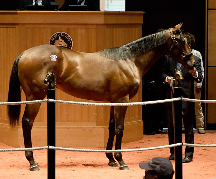 First Carpe Diem summer yearling sells for $150,000 title=