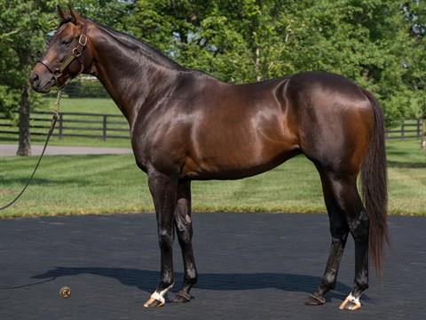 Colonel John filly crushes foes in Angie C. S. title=