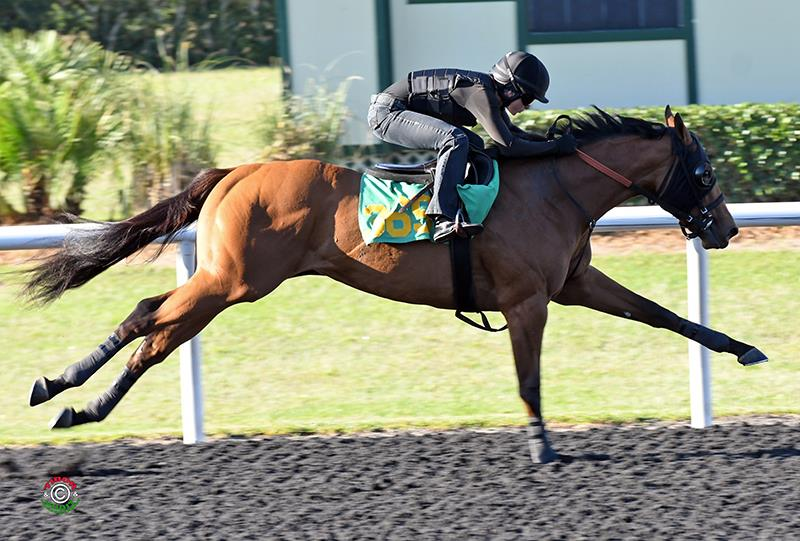 $475,000 Commissioner filly highlights Wednesday OBS 2yo sale title=