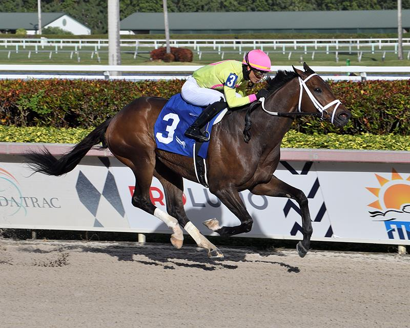 Congrats' Last Judgment dominates Sunshine Classic at Gulfstream Park title=