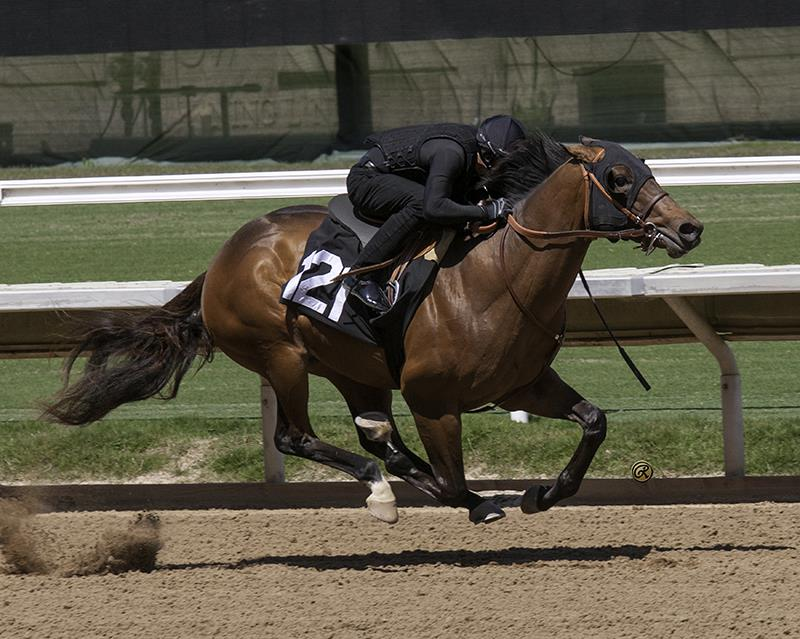 $360,000 colt for Congrats at Barretts 2YO sale title=