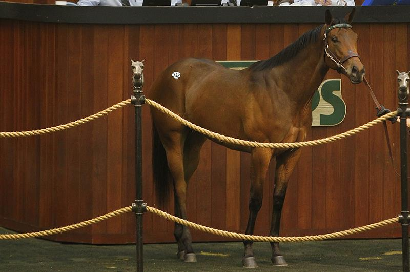 $385,000 for Congrats filly at OBS March 2yo sale title=