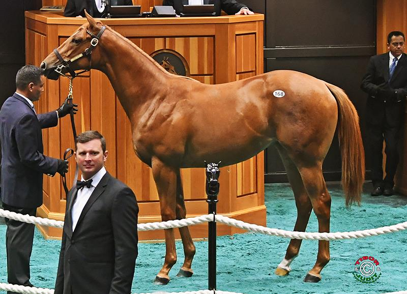 Strong finish for Constitution at Fasig-Tipton Yearlings sale title=