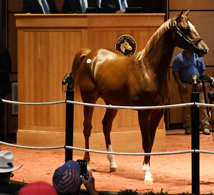 $150,000 colt leads way for Constitution at Fasig-Tipton July Yearling sale title=