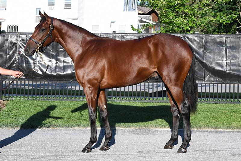 $340,000 Constitution colt tops first day of Fasig-Tipton New York Preferred sale title=