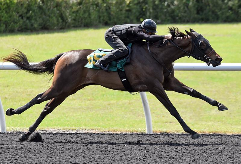 Constitution's hip No. 655 breezing for the OBS Spring Sale of 2-year-olds - Tibor and Judit photography