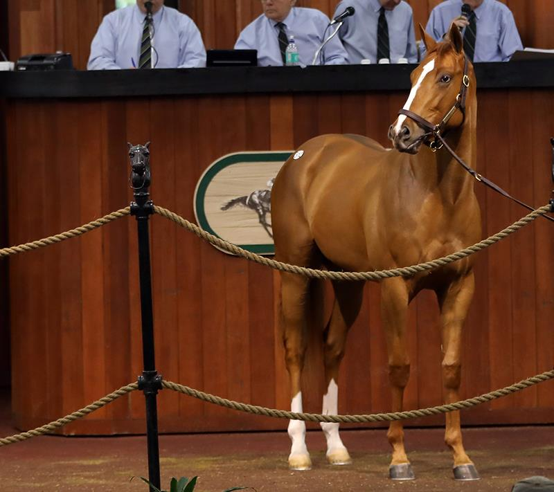 Top-class Constitution colt sells for $350,000 at OBS 2YO sale title=