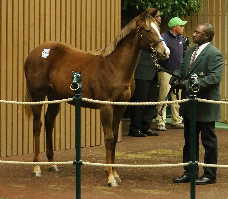 Daredevil's first Keeneland weanlings bring six figures on Thursday title=