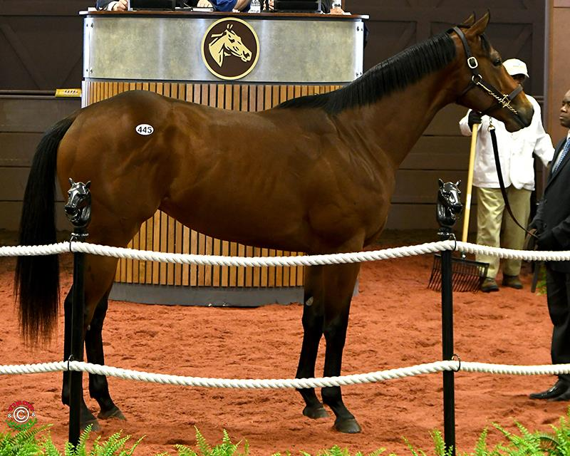 $250,000 for Daredevil colt at Fasig-Tipton Midlantic sale title=