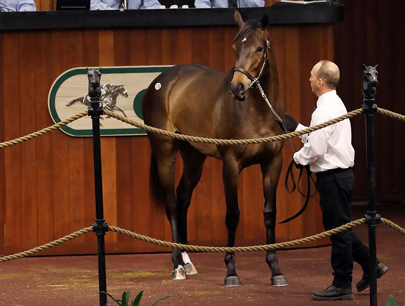 Daredevil filly goes to $155,000 Tuesday at OBS title=